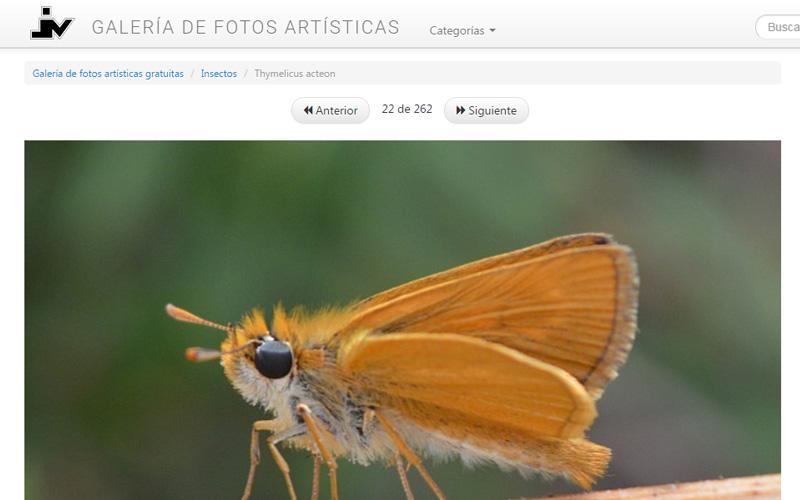Imagen 3 de 8 - Galería de Fotos Artísticas