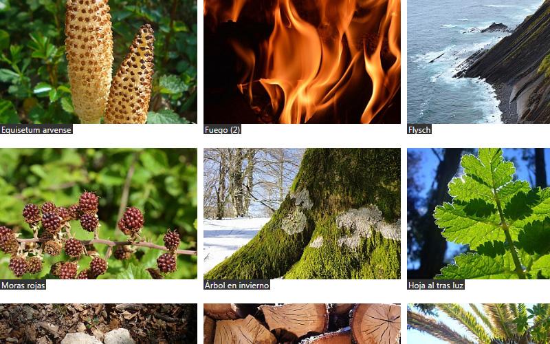 Imagen 2 de 8 - Galería de Fotos Artísticas